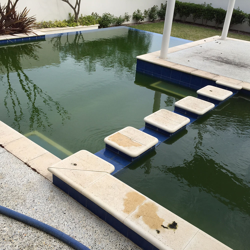 Oh No Algae Bloom Dealing With Green Pool Water Jmc